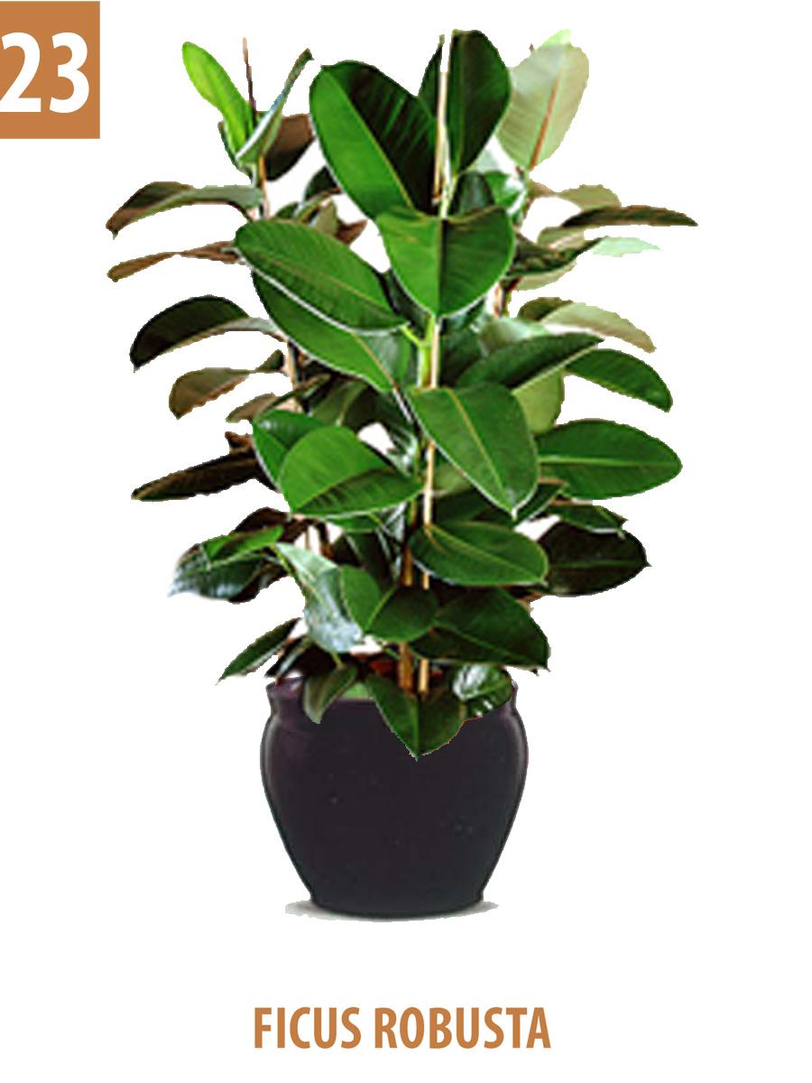 Indoor plants green dream for Indoor green plants images